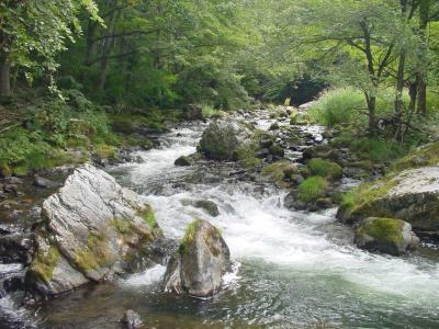 丹藤川渓流 -